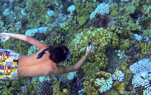 Molokini-Snorkel-Trips.jpeg