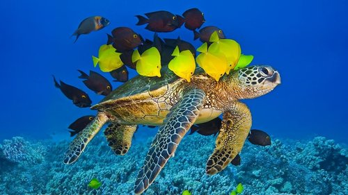 Molokini-Turtle-Fish.jpeg