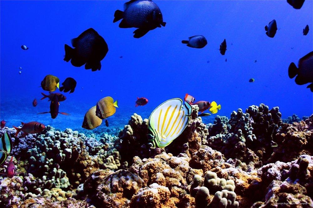 Malolo-Molokini-Snorkeling.jpeg