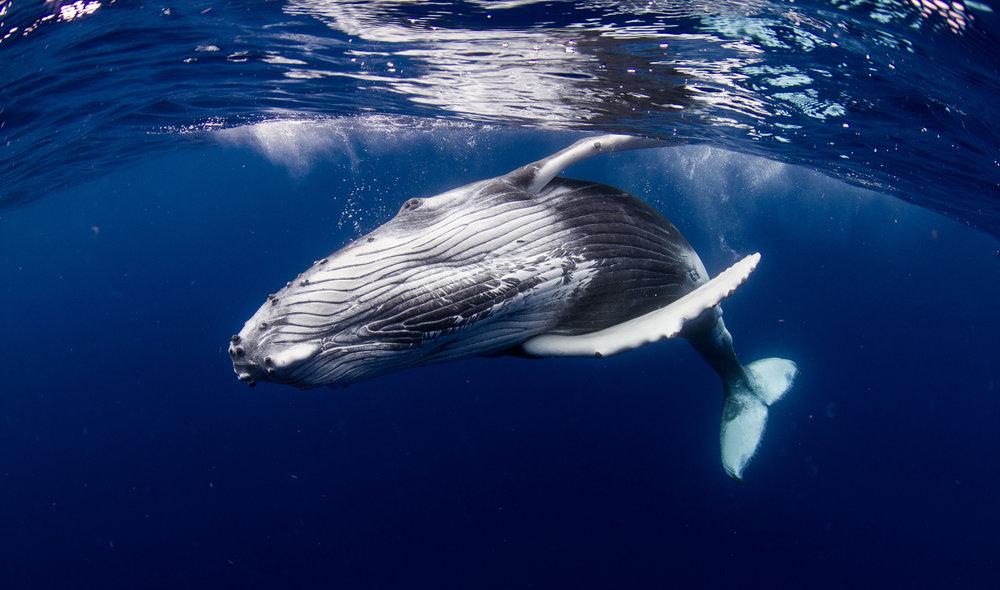 Whale Watch Snorkel.jpg