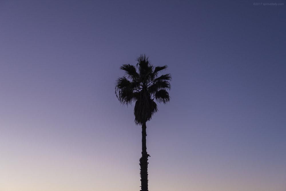 One Palm Dawn