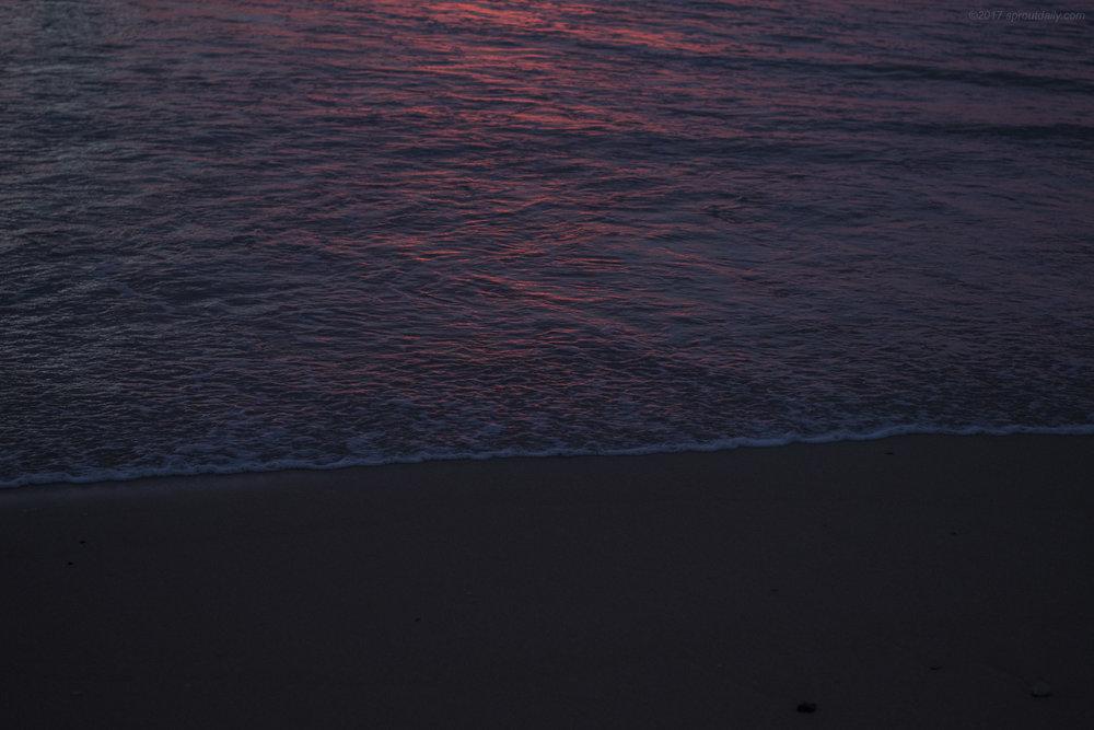 Pink Noir