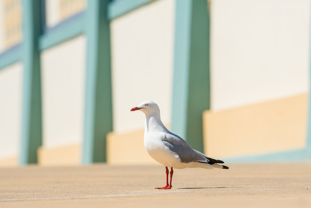 Art Deco 'Gull
