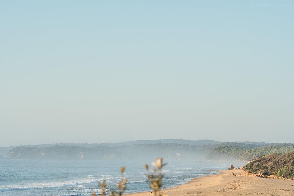 South Coast Landscape