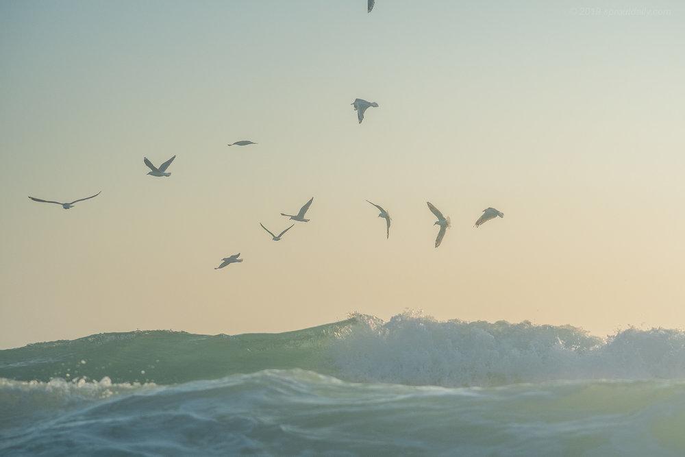 Bit of bird life about... must be baitfish!
