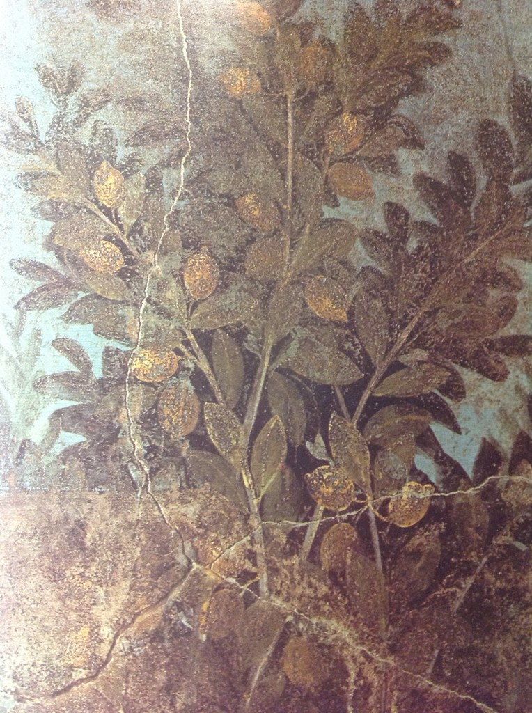 Lemon tree in Roman wallpainting from Pompeii, 1st c. CE, House of the Fruit Orchard