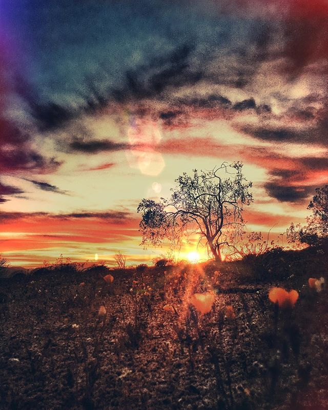 The infinite sky is motionless overheard As the storm of colors Still seek their end in peace Between no longer and not yet. 💖by Me 💖 // A poem I wrote last spring, inspired by the @joshuatreenps #sunsets that often take my breath away. Nature, my safe heaven, my best friend... 🦋 grateful for magical places such as this, that need to be protected and preserved for the sake of our well being as humans on this Earth, we need places like this to be able to escape the intensity of cities and allow us to reconnect to Mother Earth and let her heal us. #JTNPphotocontest