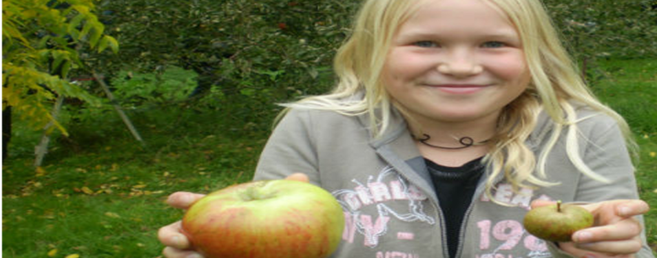 appleday2014.png