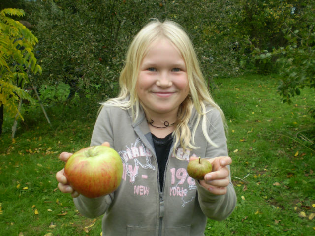 and apple day 2010 021-w640-h600.jpg