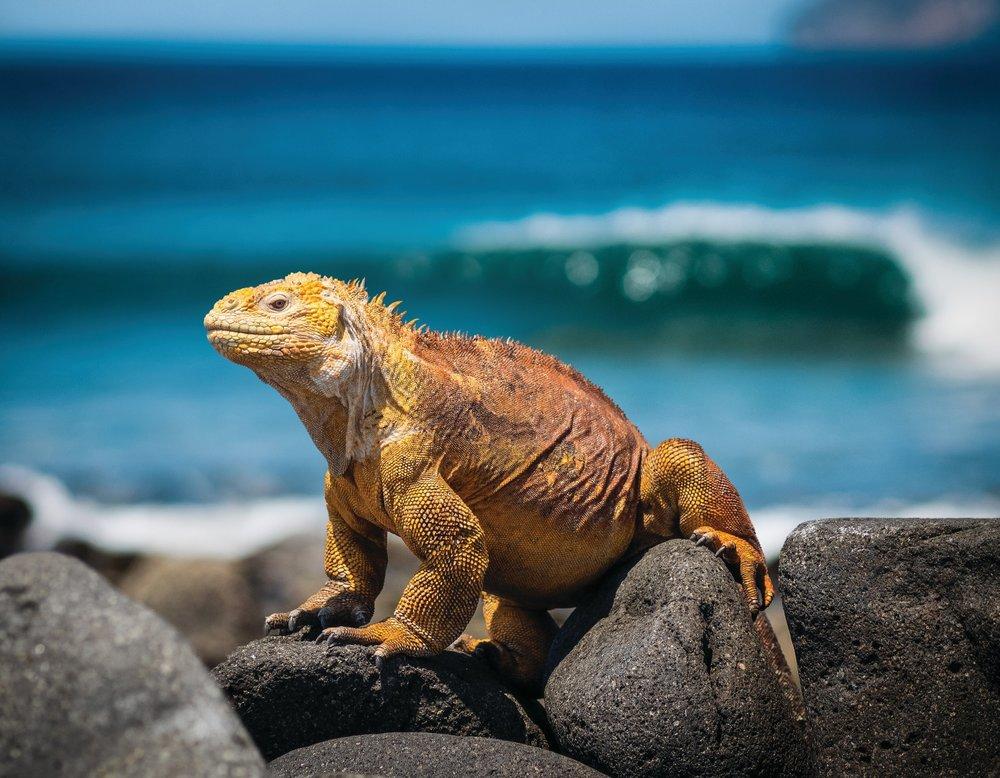 Galapagos.jpeg