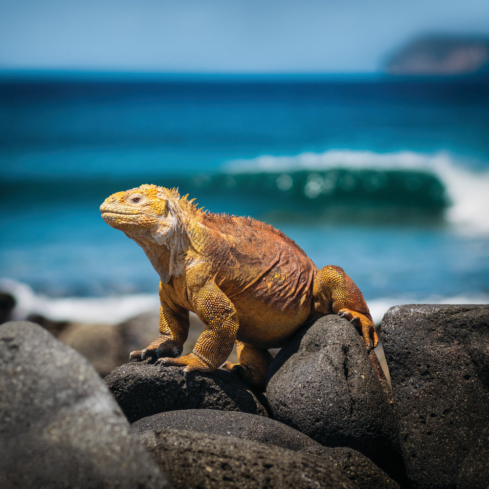 Galapagos Islands Expedition 2019