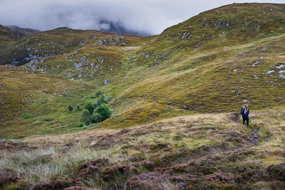 Intrepid Teysia in the heath