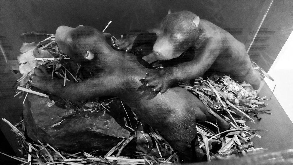 weird beaverbabies