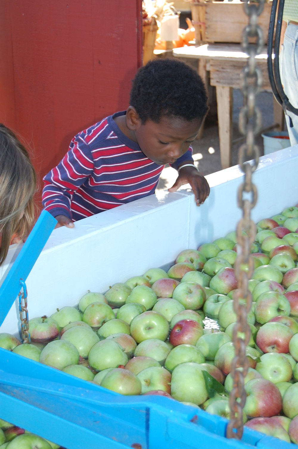 The Hacketts now sell all of their apples and cider at their on-farm store on South Street, and host thousands of children on school field trips each fall.