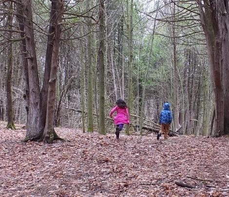 woods .jpg