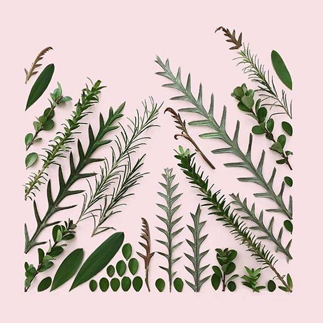 🌿composition via @kmsalvagedesign 🌱 . . . . . . . . #botanicals#inspiredbynature#creativehappylife#allthingsbotanical#flowerlovers#prettythings#dailyforage#inspogram#delicate#shopsmalllove#emergingdesigner#oleandercollection
