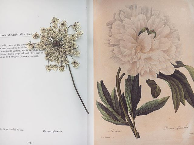 Exploring ideas for the next collection #staytuned 🌱 . . . . . . . . . #inspiredbynature#botanicals#floralinspiration#flowerpress#queenanneslace#emergingdesigner#designersprocess#nyfashion#followingflowers#oleandercollection