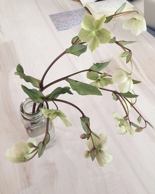 Meet hellebores, a flowering plant and the inspiration for our next capsule collection. Isn't she beautiful?  #inspiredbynature #oleandercollection 🌱 . . . . . . . #inspo#flowerfriday#hellebores#botanicalbliss#fashionandflowers#botanicals#creativehappylife#dailyforage#delicate#process#followingflowers#botanicalpickmeup#shopsmall#emergingdesigner#nyfashion#nyclove#madeinnyc
