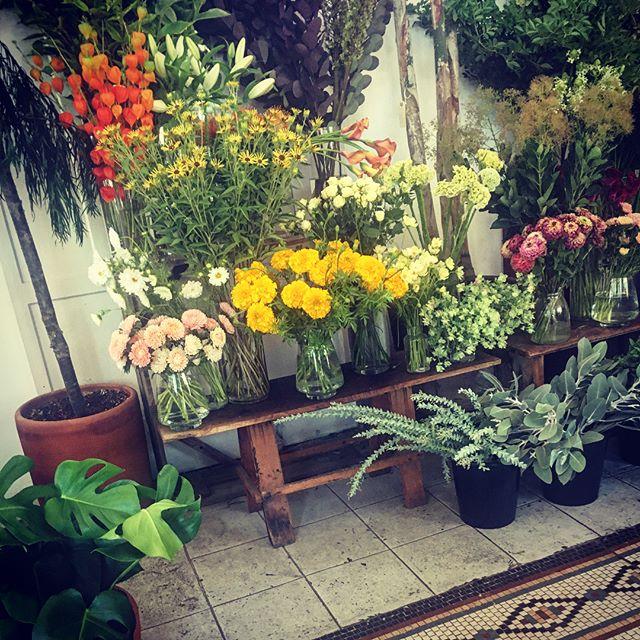 Indoor jungle at @solabeeflowers swipe for more ▶️▶️ . . . . . . . . . . #flowershop#portland#alltheprettyflorals#followingflowers#floralinspiration#artofvisuals#homedecor#botanicalbliss#creativehappylife#flowerstagram#botanicalpickmeup#thelifestylecollective#underthefloralspell#flowerpower#pretty#inspogram#botanicals#dailyforage#inspiredbynature