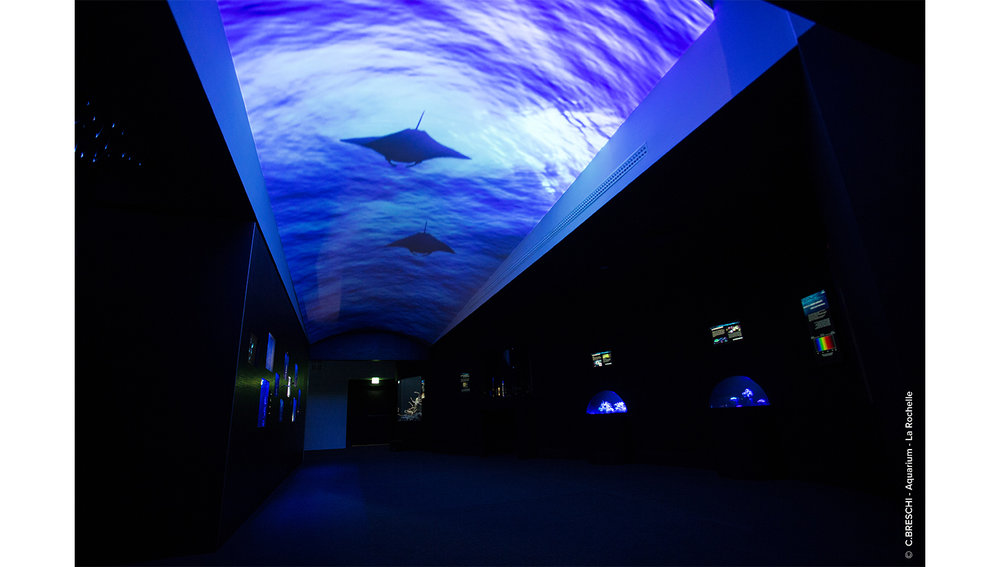 aquarium1-03-sport&culture-equipement&tertiaire-alterlab.jpg