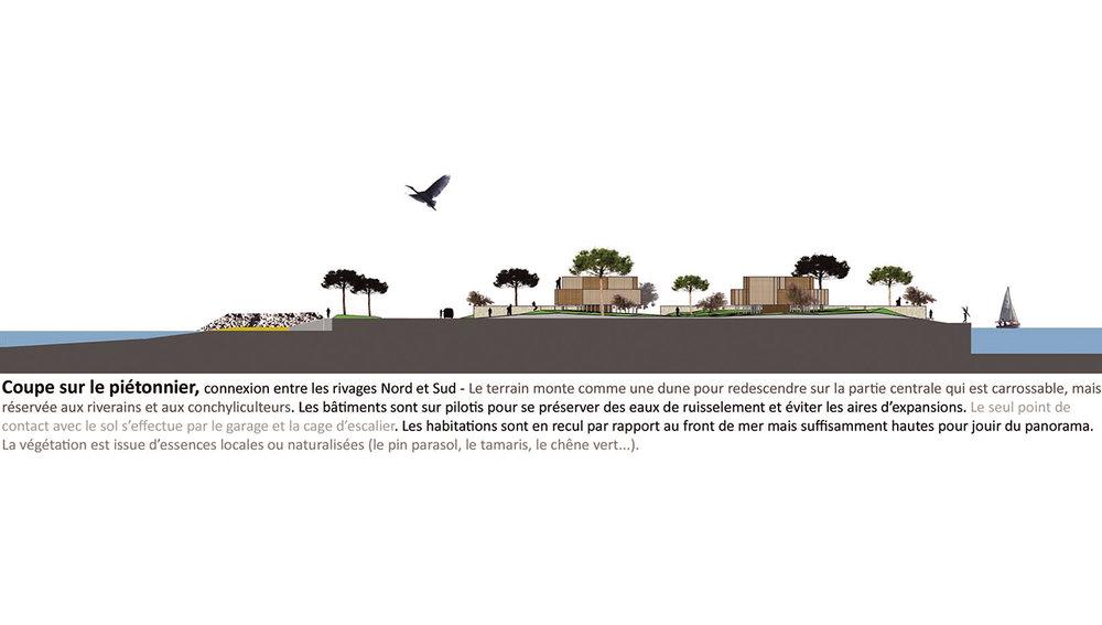Xynthia-coupeTransversale-urbanisme&paysage-alterlab.jpg