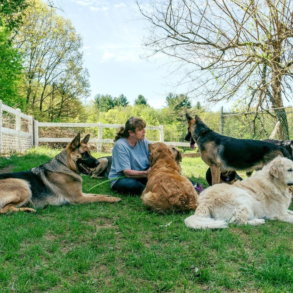 PanaRico Farm Doggie Day Care