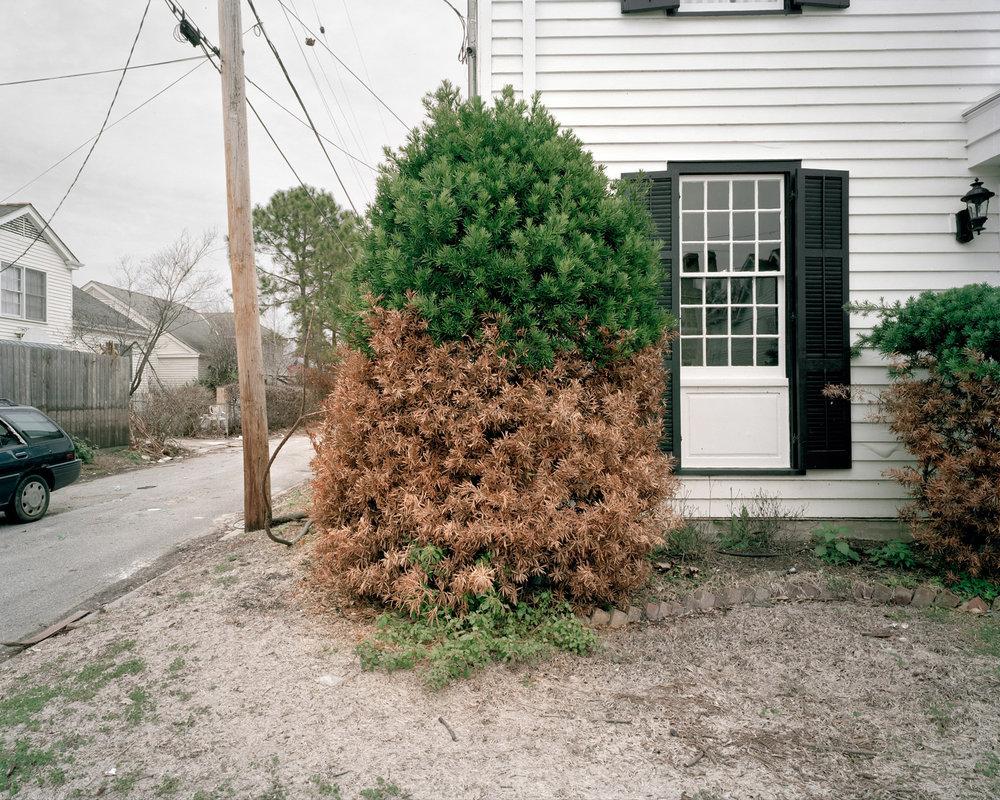 half bush_Flat.jpg