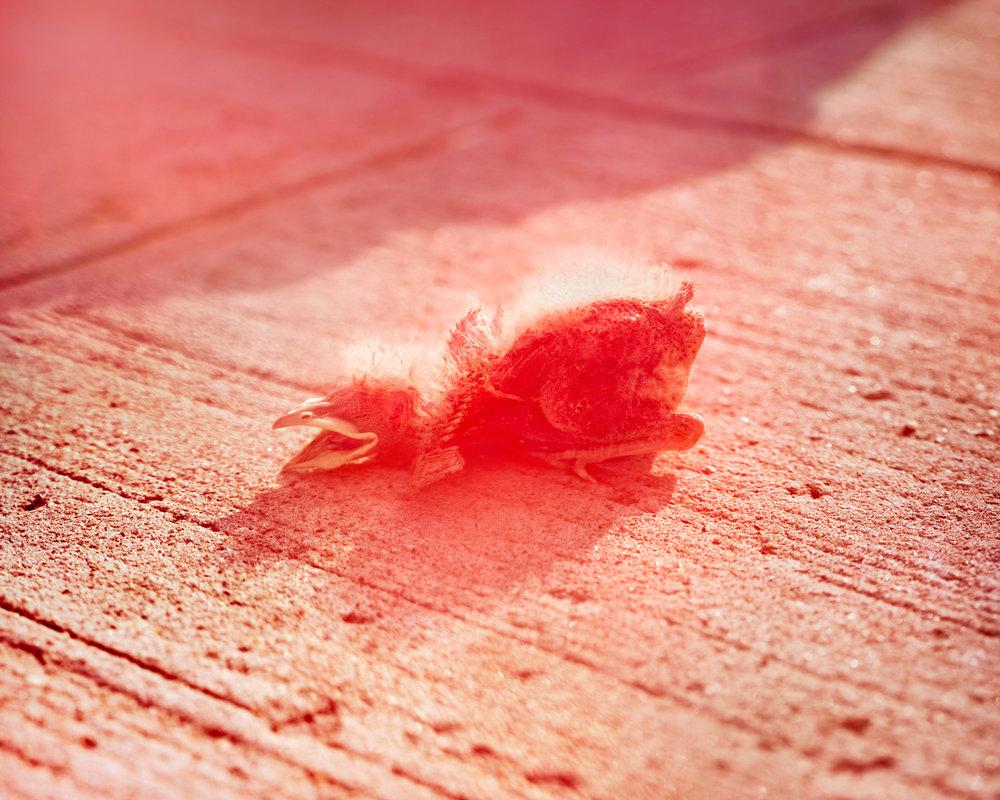 Baby-Bird,-NY.jpg