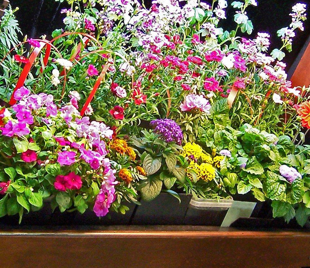 close crop from larger flower array.jpg