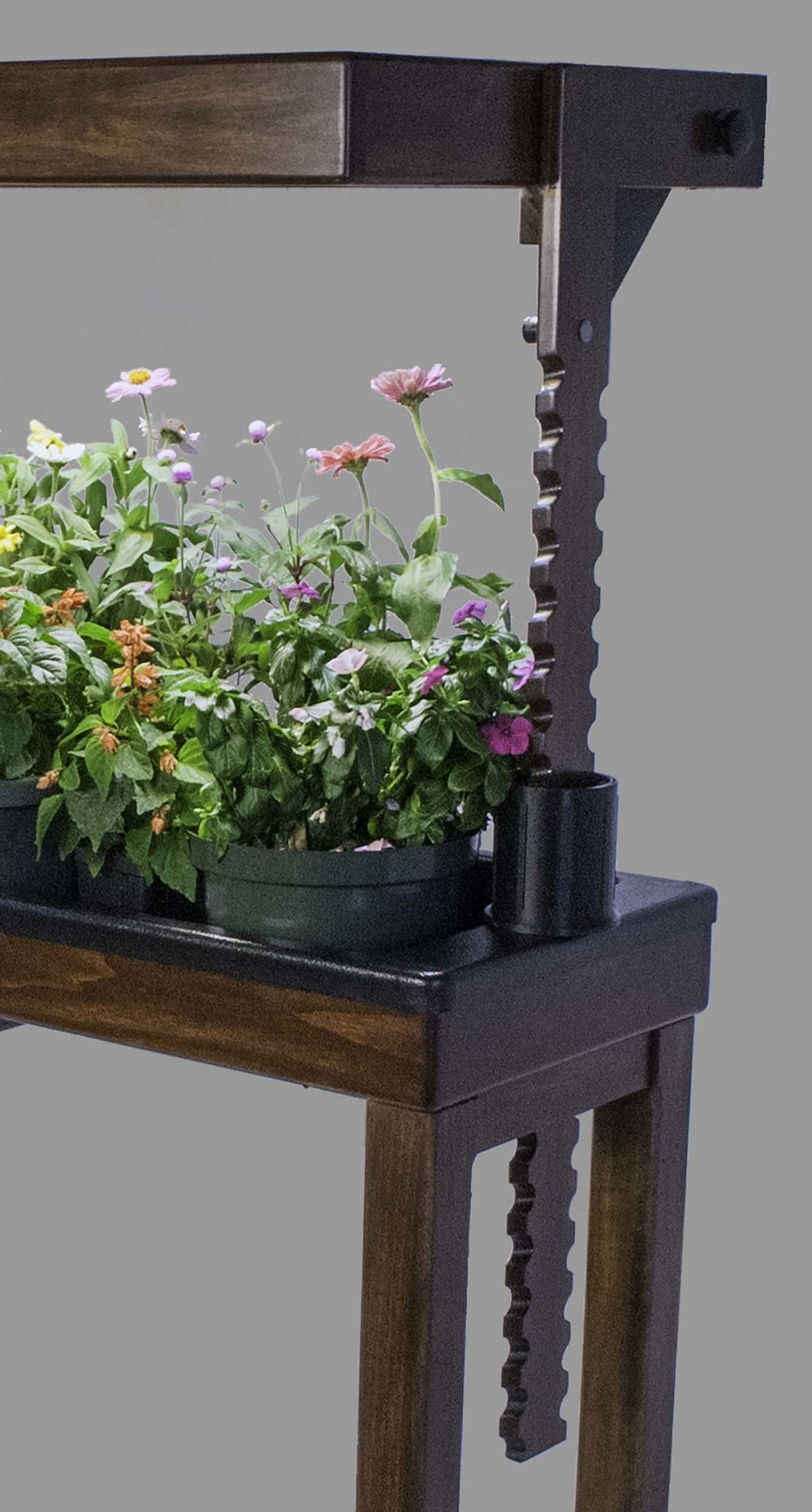 Raise the height of the grow lights as your plants grow