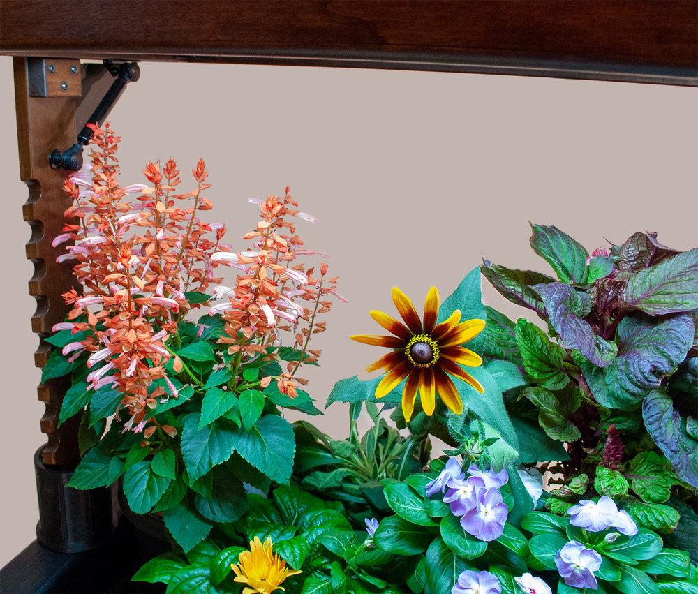 Salvia, Rudbeckia, Vinca, Gerbera, and Celosia