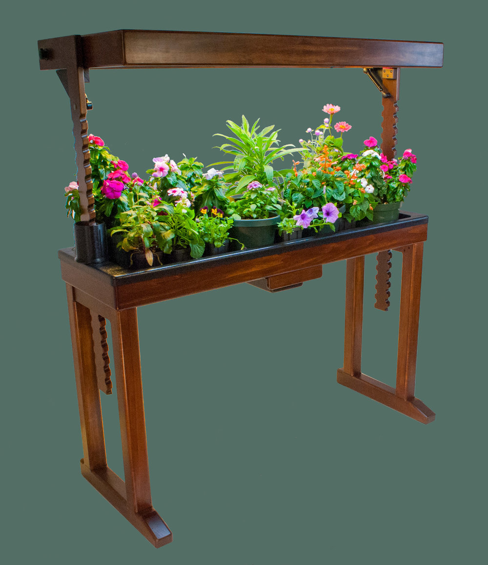 BloomInLight with Petunia, Johnny-Jump-Up (Viola Tricolor), Celosia, Vinca, and Salvia