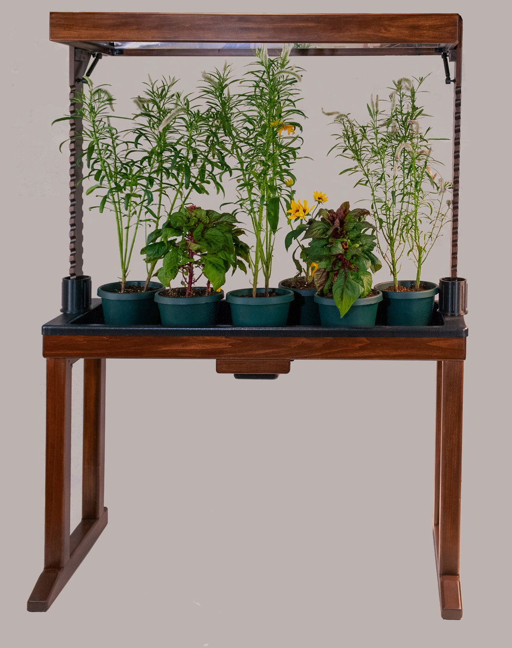 BloomInLight with Celosia Spicata, Celosia Plumosa, and Rudbeckia