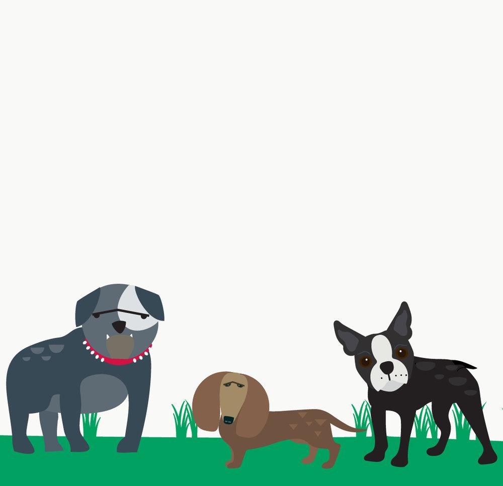 actio_dogs-01.jpg