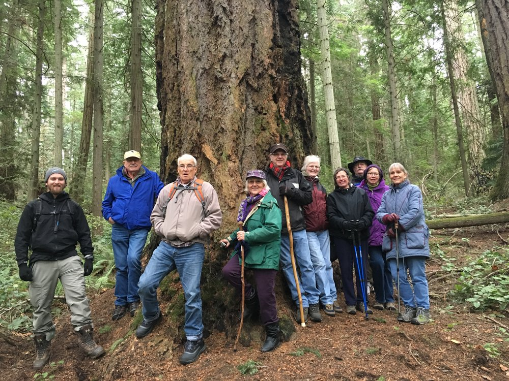 Old Growth Hikes.jpg