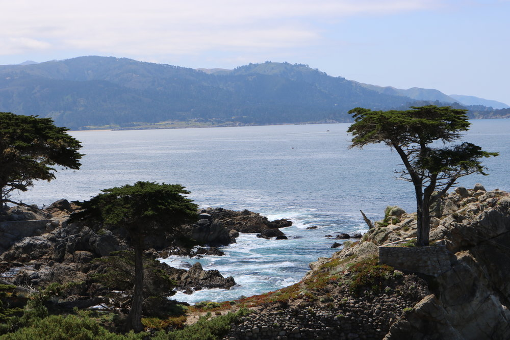 Cypress Tree and Ocean Views off 17 Mile Drive.