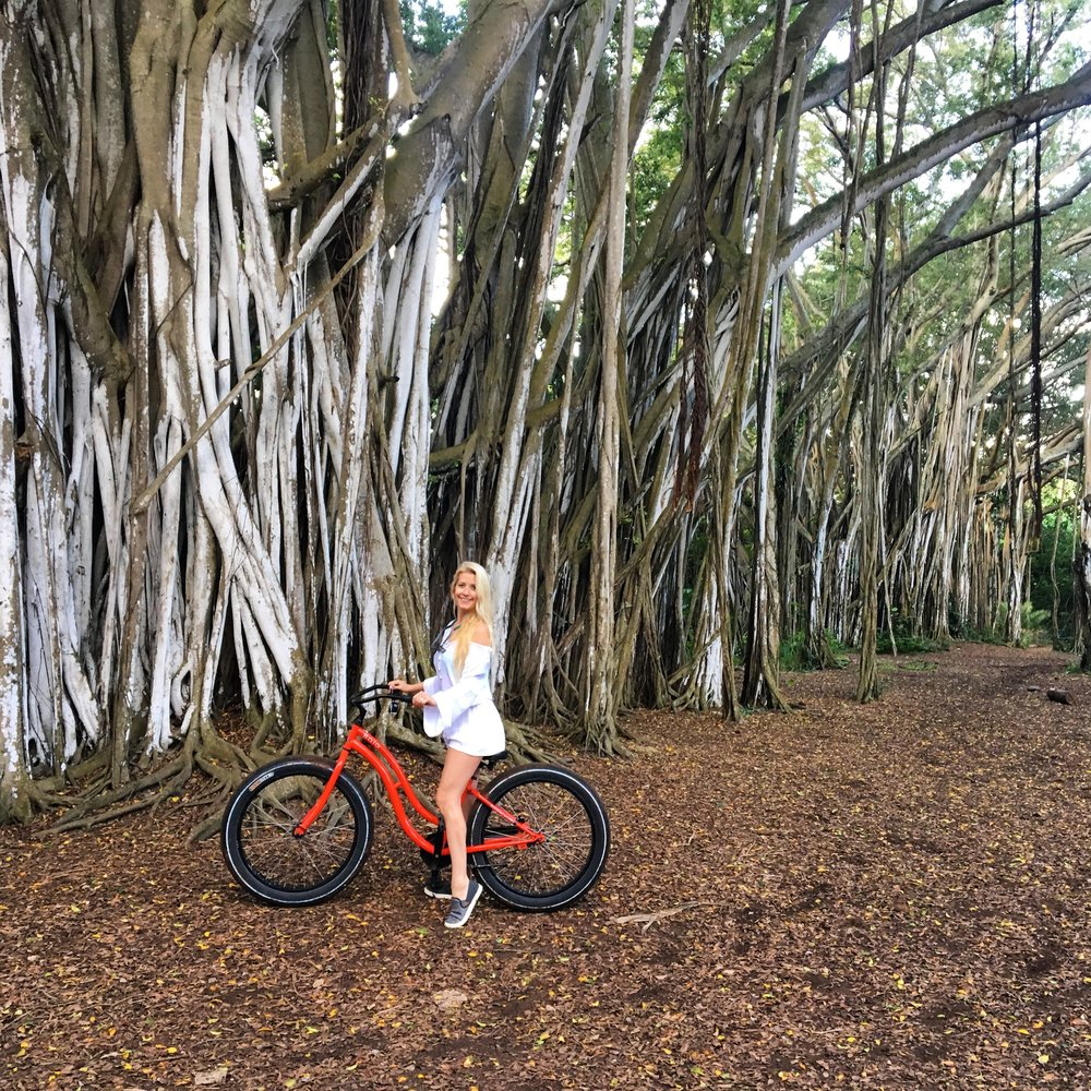 Banyan Trees at Turtle Bay Resort.