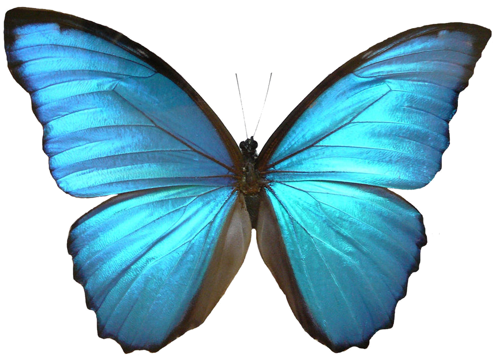 Blue Butterfly Transparent