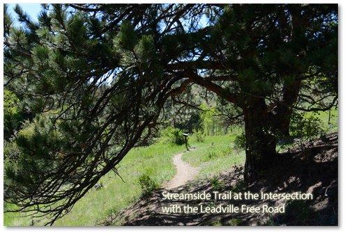 Streamside Trail at Leadville Free Road.jpg