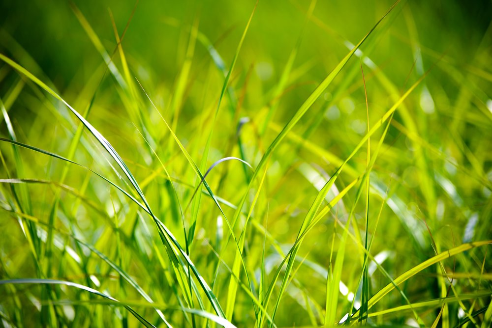 grass-field-the-background-the-sun-158530.jpeg
