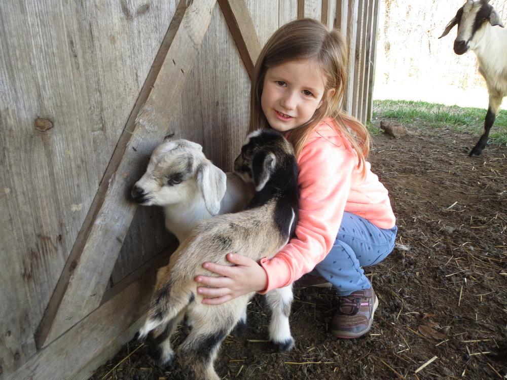 Kiko Goat Kids