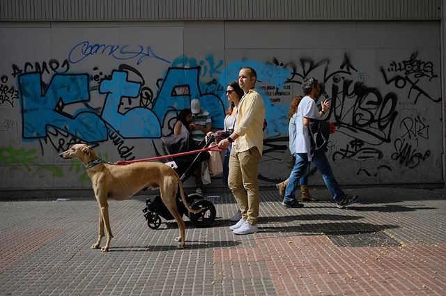 Shot in Madrid, 12th of April. Got lucky with the balance of color between the dog owner and the dog. - - - - #streetphotographer #streetphotography #madrid #xt2 #fujifilmxseries #fujifilm