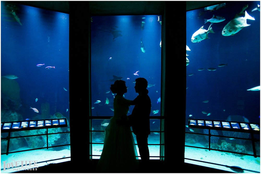National Aquarium Wedding_0004.jpg