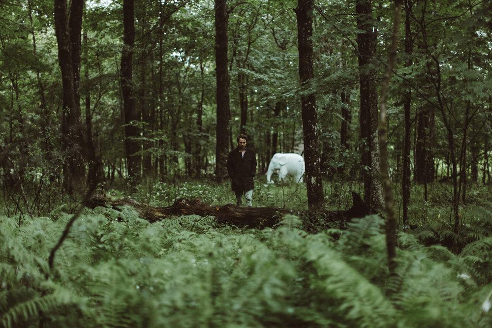 forest-3.jpg