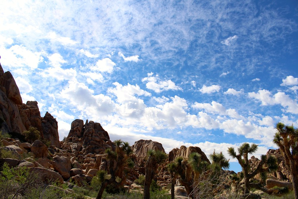 Joshua_Tree_Skyline