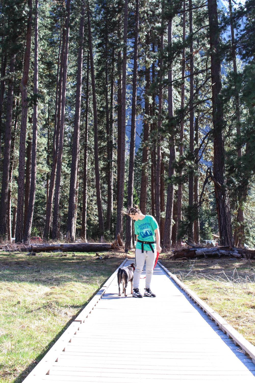 Yosemite_Dog