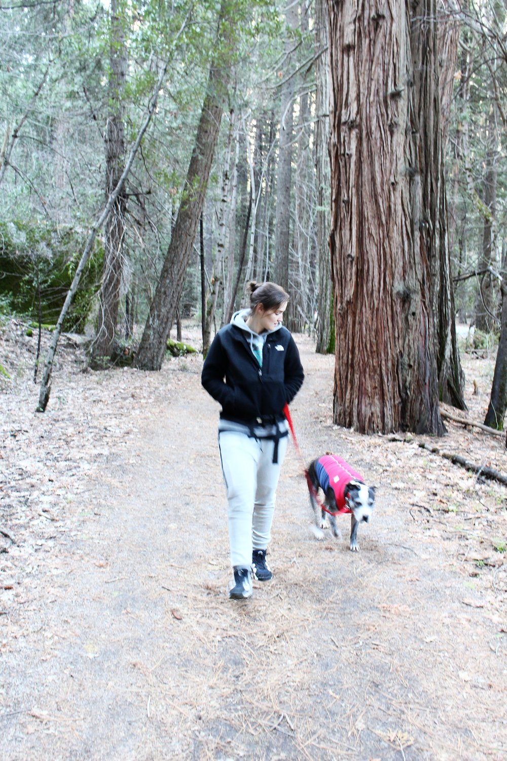 Dog_Walk_Yosemite