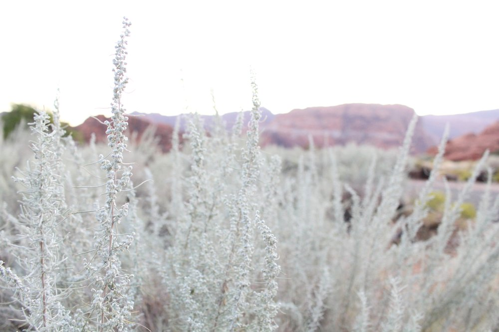 Snow_Canyon_Vegetation