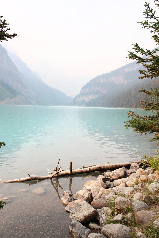 Lake_Louise_Tree