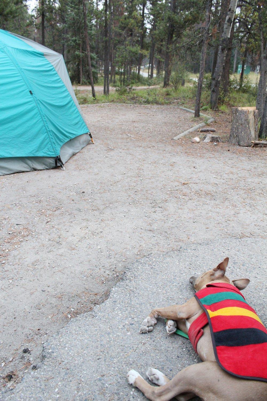 Wapiti_Campground
